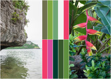 Beach on tropical island. Flowers. Collage Stock Photo