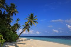 Beach of tropical island. Beach of tropical maldivian island Royalty Free Stock Image