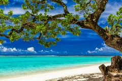 Beach on tropical island during sunny day framed by a tree with Stock Images