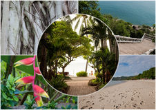 Beach on the tropical island. Thailand. Flowers. Collage Royalty Free Stock Images