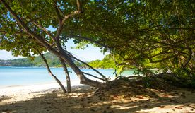 Beach and tropical jungle. Scenic view of beach and tropical jungle stock images