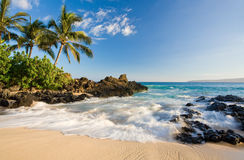 Beach tropical maui hawaii. Beach in makena cove with palm tree and waves in south maui, hawaii stock image
