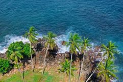 Beach tropical ocean with coral, palm trees and lagoon. Top view. Beach tropical ocean with coral, palm trees and lagoon. View from above, from the height of the Stock Images