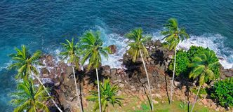 Beach tropical ocean with coral, palm trees and lagoon. Top view. Beach tropical ocean with coral, palm trees and lagoon. View from above, from the height of the Royalty Free Stock Photo