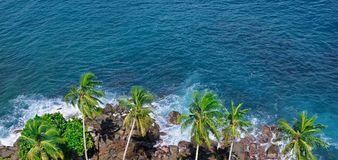 Beach tropical ocean with coral, palm trees and lagoon. Top view. Beach tropical ocean with coral, palm trees and lagoon. View from above, from the height of the Royalty Free Stock Photography