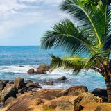 Beach tropical ocean with palm trees and lagoon. Beach tropical ocean with boulders, palm trees and lagoon Royalty Free Stock Photography
