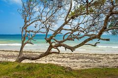 Beach and tropical ocean. Sky and ocean Royalty Free Stock Images