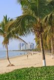 Beach in tropical with pal trees, Sanya, Hainan Island, China. View on a beach in tropical with pal trees, Sanya, Hainan Island, China stock images