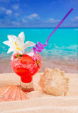 Beach tropical red cocktail on caribbean white sand flower. And seashell stock photos