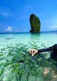 Beach and tropical sea, Krabi, in thailand. Beautiful beach and tropical sea, Krabi, in thailand royalty free stock photo