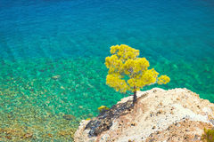 Beach and tropical sea. Lonely tree on a background of the sea Stock Photography