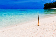 Beach and tropical shell on white sand Stock Images