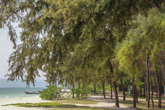 The beach with tropical trees Stock Image