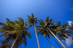 Beach with tropical trees, island Koh Samui Thailand. Stock Images