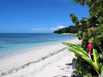 Beach and tropical vegetation Stock Photo