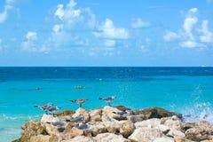 Beach turquoise sea cancun. Seagulls in caribbean beach resort Royalty Free Stock Photos