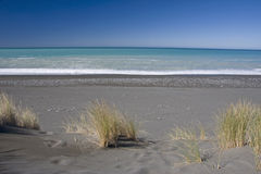 Beach tussock Royalty Free Stock Image