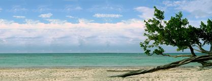 Beach with twisted tree Royalty Free Stock Photography