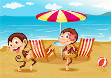 A beach with two monkeys Royalty Free Stock Images