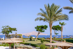 Beach umbrella and palm trees at a tropical resort Royalty Free Stock Photos