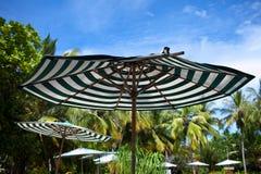 Beach umbrella. Striped beach umbrella on a background of palm trees Royalty Free Stock Photos