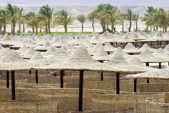 Beach umbrellas and sunbeds in Egypt. Marsa Alam Stock Photography