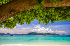 Beach under a Tree Stock Photography