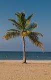 Beach vacation accessories. Beach on the Indian Ocean island of Sri Lanka. Coast Pasikudah Royalty Free Stock Photo
