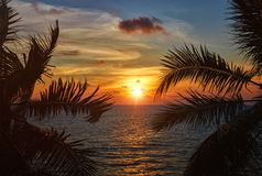 Ocean sunset visible through palm leaves royalty free stock images