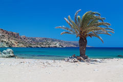 Beach Vai on Crete Stock Photos