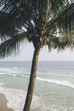Beach in Varkala in Kerala state Royalty Free Stock Photography