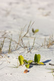 Beach vegetation Royalty Free Stock Images