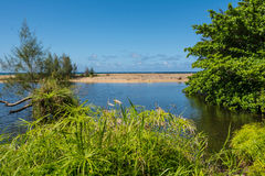 The beach through the vegetation in Kauai. A view of theeach through the vegetation in Kauai, Hawaii Royalty Free Stock Photo