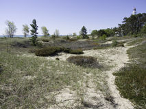 Beach Vegetation. A variety of beach vegetation (beach grass, junipers etc.) growing on and stabilizing a sand dune on the shore of Lake Michigan Stock Photography