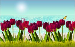 Beach view, fence, tulips, grass sky summer royalty free illustration
