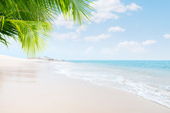 Beach. View of nice tropical beach with some palms stock image