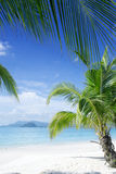 On beach. View of nice tropical beach with some palms stock image