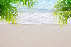 Beach. View of nice tropical beach with some palms royalty free stock image