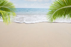 Beach. View of nice tropical beach with some palms stock images