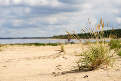 Beach view with plants in water and blue sky Stock Photography