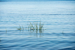 Beach view with plants in water Royalty Free Stock Photo