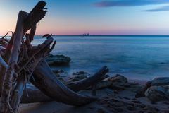 Beach view at sunrise with old tree and rocks long exposure Royalty Free Stock Photo