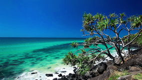 Beach view with a tree in Burleigh Heads National Park, Australia stock footage