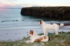 Beach view with two dogs Stock Photography