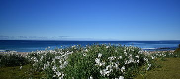 Beach View. With white flowers Stock Photo