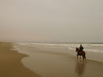 Beach Walk. Peruvian Paso and rider on a beach in Lima, Per Royalty Free Stock Image