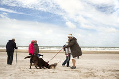 Beach walk with dog. Walk beach walk with dog, many people compared with their dogs on the beach, it blows a strong wind, northsea denmark Stock Images