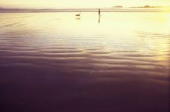 Beach walking. A distanced person having a walk in a wide beach, gold sunset colours Stock Photo