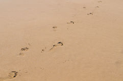 Beach, wave and footsteps Stock Image