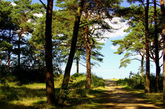 Beach way. To the Baltic Sea through pine forest Stock Photo
